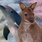 Porpoise and Wallaby